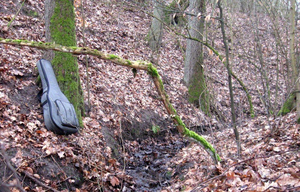 Gitara leżąca w lesie