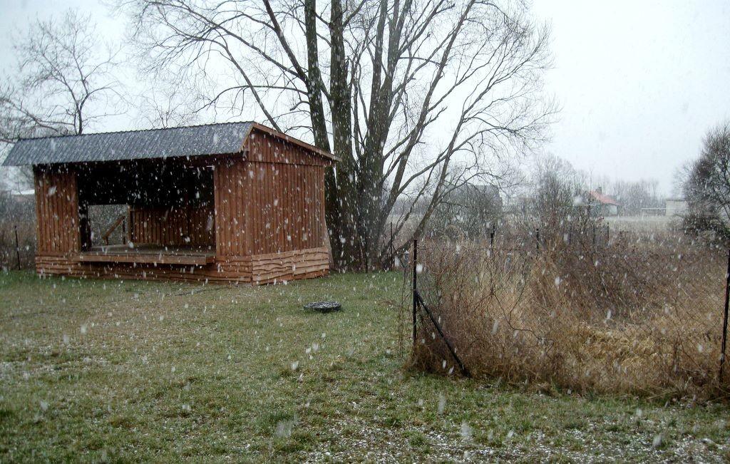 Niespodziewany śnieg