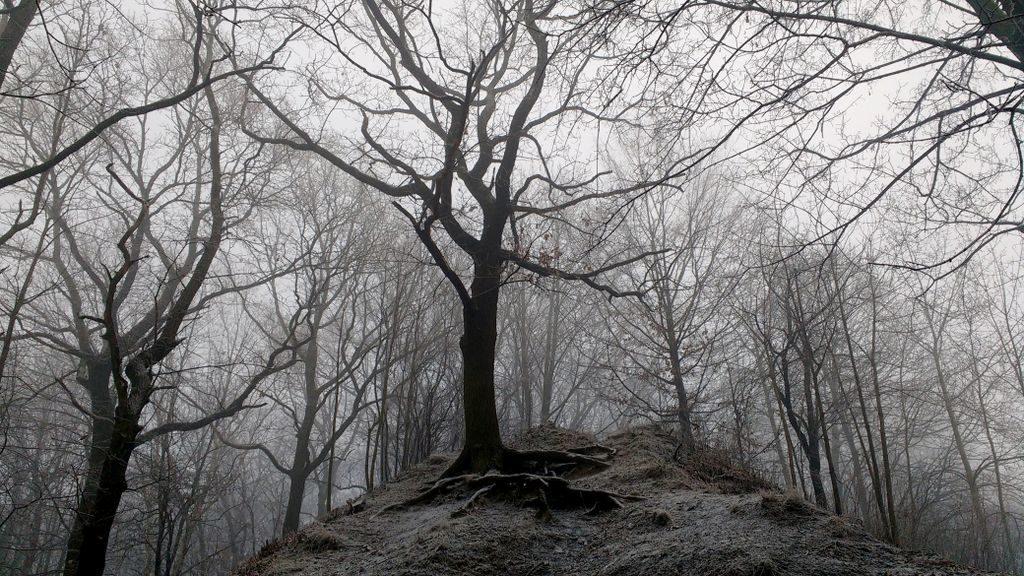 Jest spokój w drzewach zimą.